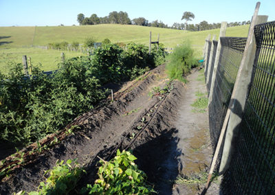 accommodation-vegetable-patch